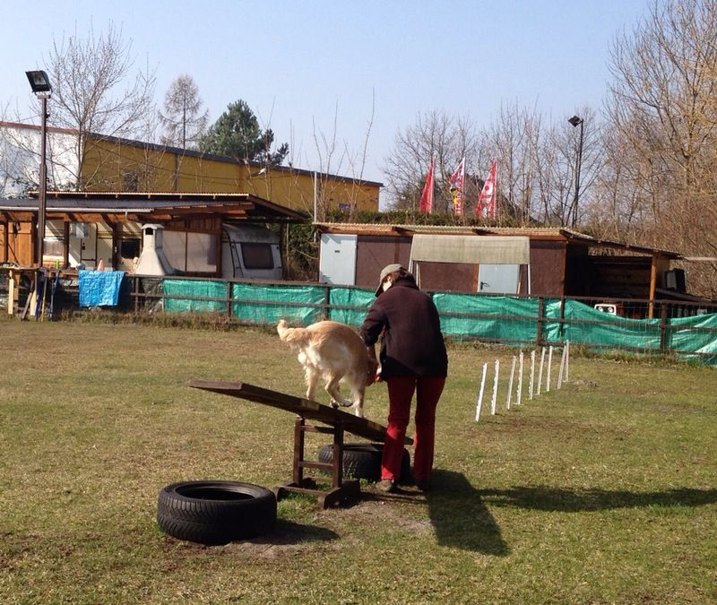 Hundeschüler bei der Arbeit