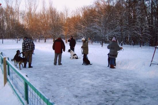 Junghundgruppe Hundeschule in Zossen