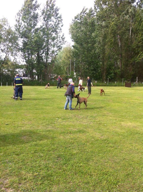 Besuch von Hundeschule Fischer