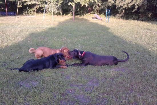 Hundeschule in Zossen