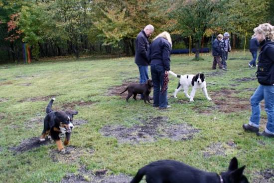 Welpenstunde Hundeschule in Zossen